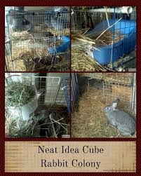 colony raising rabbits how to get started farming my backyard
