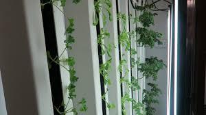 indoor hydroponic vertical gardening using zip grow towers youtube