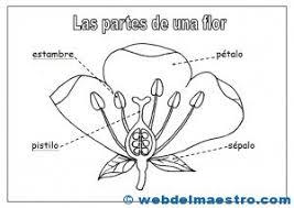 partes una flor del maestro