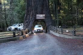 Tree Chandelier World Famous Chandelier Tree California Curiosities