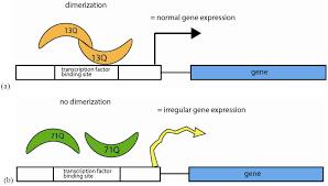 genes free full text beyond junk variable tandem repeats as