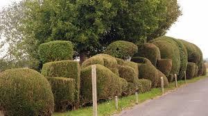 Garden Topiary Wire Forms Cloud Pruned Hedges U0026 Topiary Fun An Englishman U0027s Garden Adventures
