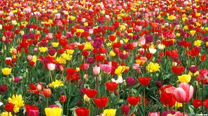 nice flower garden pic greatindex net disney and arafen