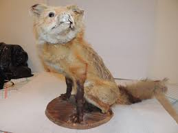 Taxidermy Fox Meme - image 733369 crappy taxidermy know your meme