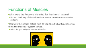 bell ringer muscle facts you can write your answer on the back of