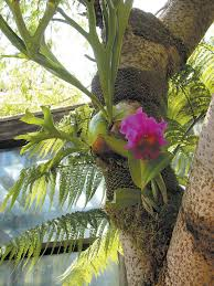Native Plants In The Tropical Rainforest Pacific Horticulture Society A Tropical Eden With A Mission