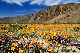 anza borrego anza borrego desert state park 8 reasons to visit now ync