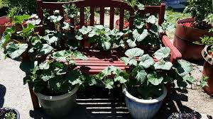 keys to growing vegetables in pots and containers