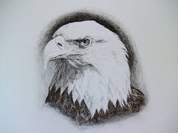bald eagle drawings page 5 of 10 fine art america
