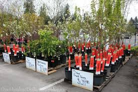sweet deals at the home depot plant and garden sale one hundred