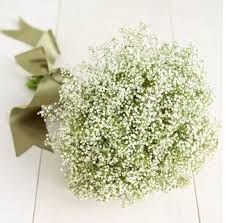 fleurs blanches mariage gypsophile mariage recherche mariage