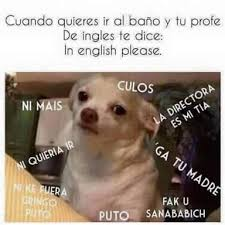 Memes De Chihuahua - memes del chihuahua dienton memes pics 2018