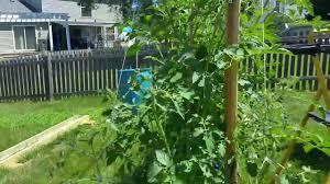 horizontal hydroponics yr 1 youtube