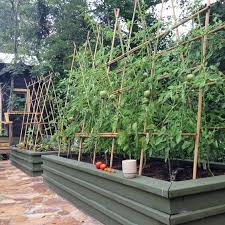 Tomatoes Trellis The Best Tomato Trellis U0026 Tomato Cages