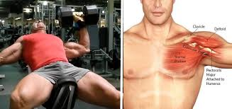 Bench Press Vs Dumbbell Press Blow Up Your Chest With The Landmine Chest Press Fitness And Power