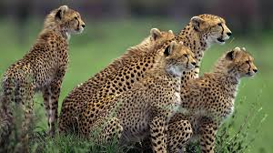 wild animal wallpapers 100 full hdq wild animal backgrounds