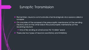 a 5 neuropharmacology synaptic transmission remember neurons