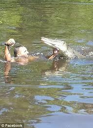 bartender resume template australia zoo crocodile feeding videos terrifying video of guide in alligator infested water