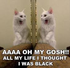 Cat Meme Funny - 25 funny cat memes sayingimages com