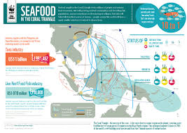 Triangular Trade Map Infographic Seafood In The Coral Triangle Wwf