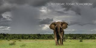 african safari animals sabi sabi luxury safari lodges private game reserve south africa