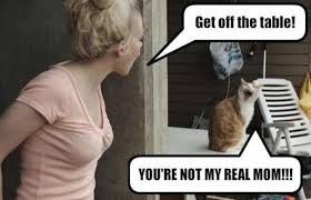 Funny Cat Lady Memes - funny cat lady meme bajiroo com