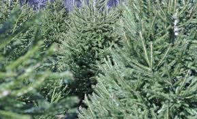 recycling district to pick up christmas trees during january