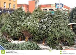 christmas trees for sale christmas lights decoration