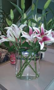 40 best tiger lily images on pinterest tiger lilies flowers and