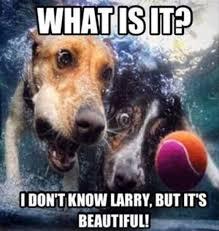 Meme What Is It - what is it funny tennis meme