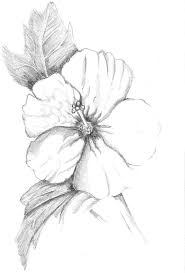 drawn hibiscus realistic pencil and in color drawn hibiscus