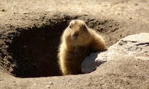 groundhog 2017 calendar 12