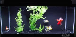 Aquarium Decoration Ideas Freshwater Bare Goldfish Tank Simple But Effective Sand Bottom Tank Design