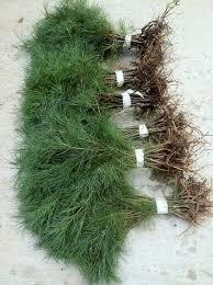 621 best nurseryseedlings starter seedlings saplings images on