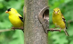 Birds In Your Backyard Discover The Birds In Your Backyard Ace Hardware Of Toco Hills