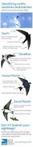 best 25 bird identification ideas on pinterest bird watching