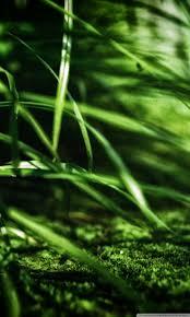 green grass hd desktop wallpaper widescreen high definition