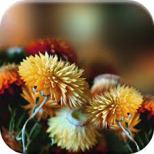 Autumn Flower Autumn Flowers Live Wallpaper Android Apps On Google Play