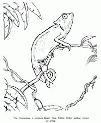 leo lionni coloring pages coloring pages tips