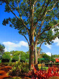 where is your favorite tree u2013 kmb travel blog