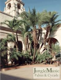 date palms the true date palm and other species of phoenix