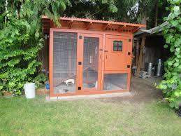 urban coop backyard chickens