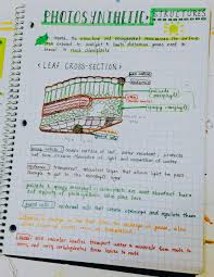 99 likes biology notes pinterest