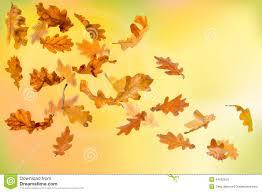 falling autumn oak leaves stock images image 32395384