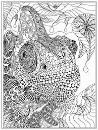 animal coloring pages for adults to print
