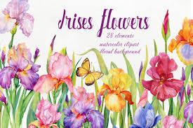 iris flowers iris flowers watercolor clipart by cli design bundles