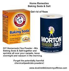 diy flea powder for your home u2013 get rid of fleas w o using