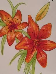 july 6th tiger lilies sketchdaily