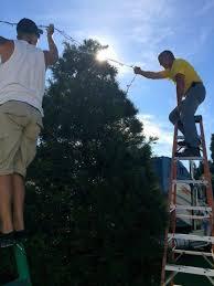 Professional Christmas Tree Decorators Estero To