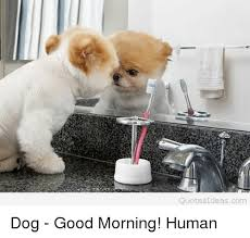 Cute Good Morning Meme - cute good morning dog pictures wallpaper animalpicture online